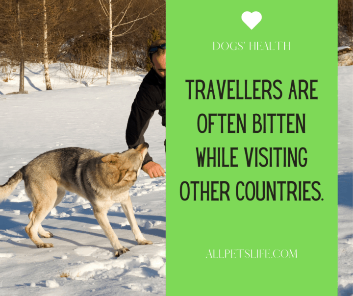 Dog Bite Statistics: visiting other countries