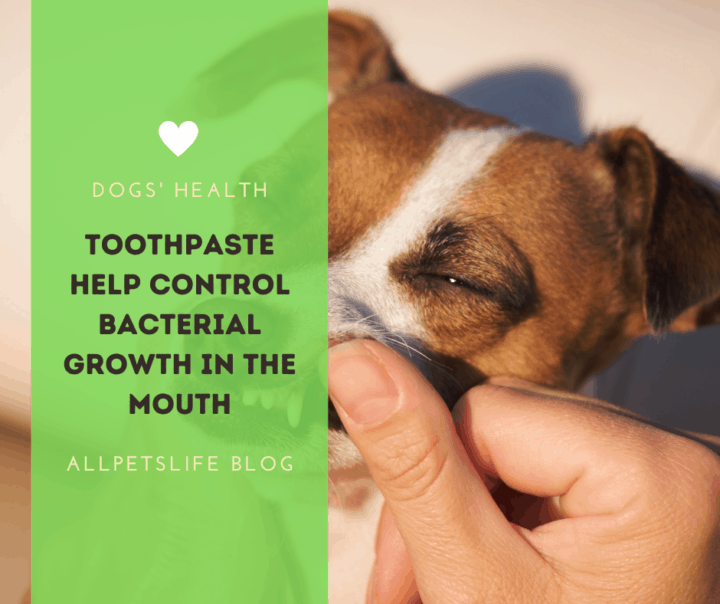 Toothpaste help control bacterial growth in the mouth