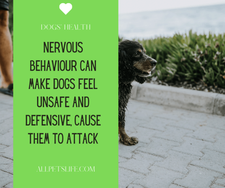 Nervous behavior can make dogs feel unsafe and defensive, causing them to attack