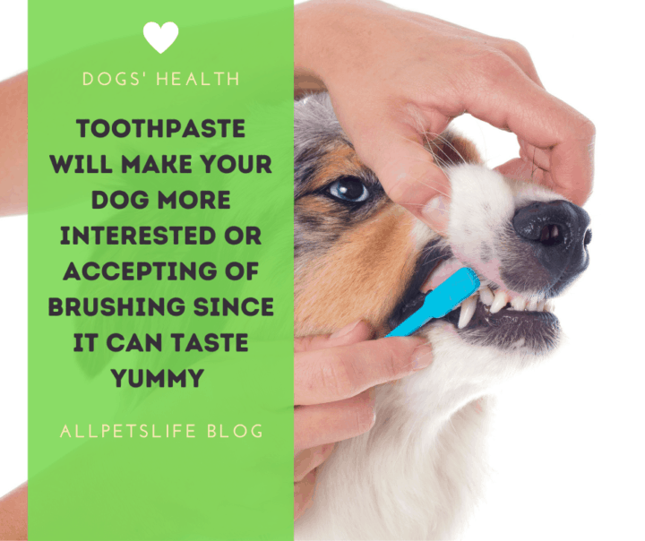 Toothpaste will make your dog more interested and aaccepting of brushing since it can taste yummy
