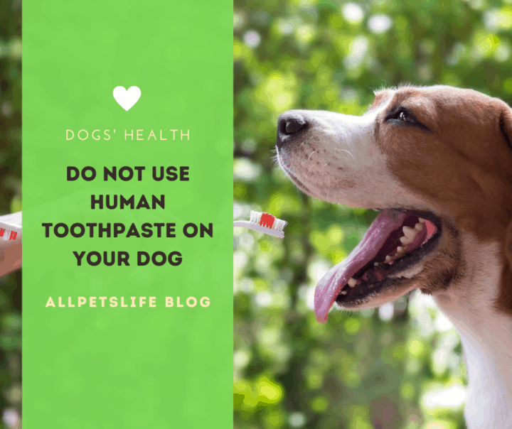 Do not use human toothpaste on your dog