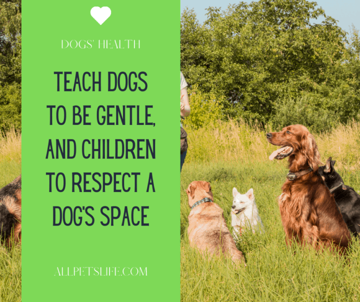 Dog attack statistics Teach dogs to be gentle and children to respect a dog's space
