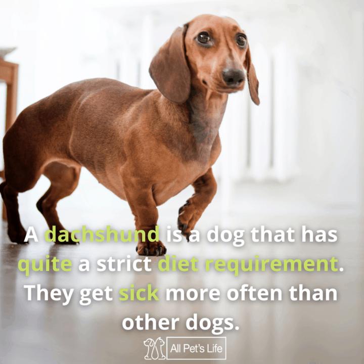 dog walking: Best Dog Food for Dachshunds