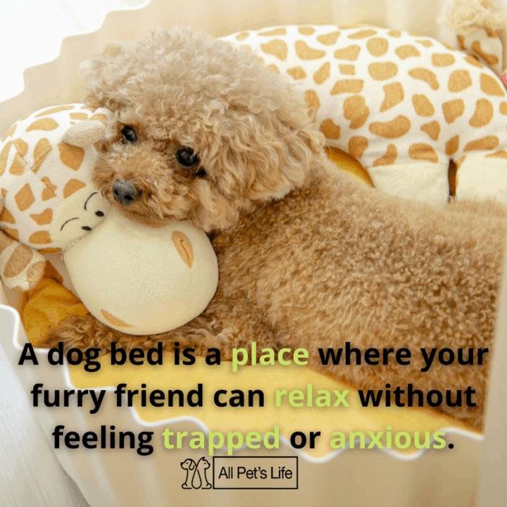 dog lying on its dog bed