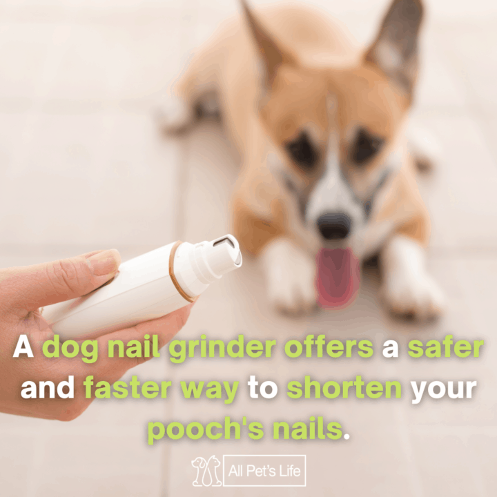 a dog nail grinder offers a safer and faster way to shorten your poochs nails