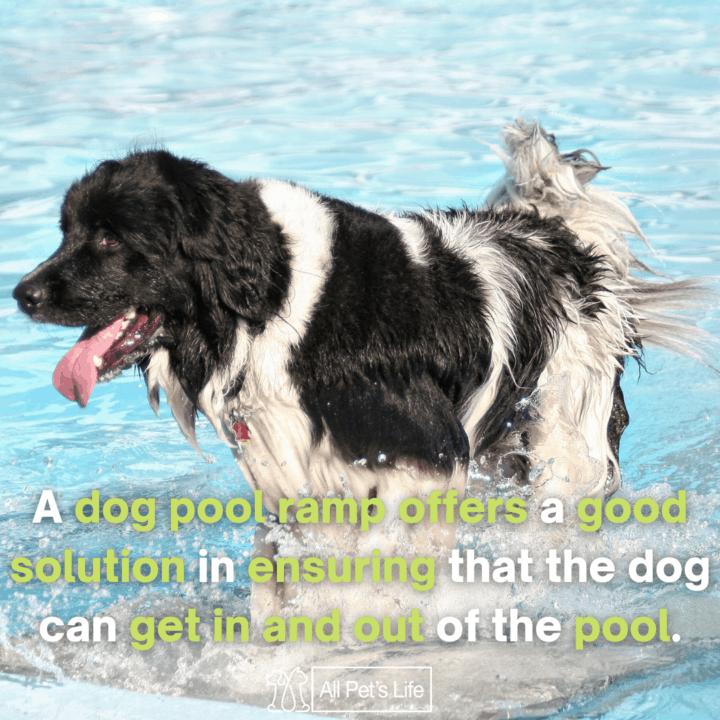 dog walking on a dog pool ramp