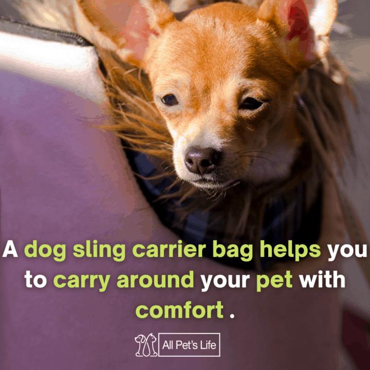 Dog in a dog sling carrier bag