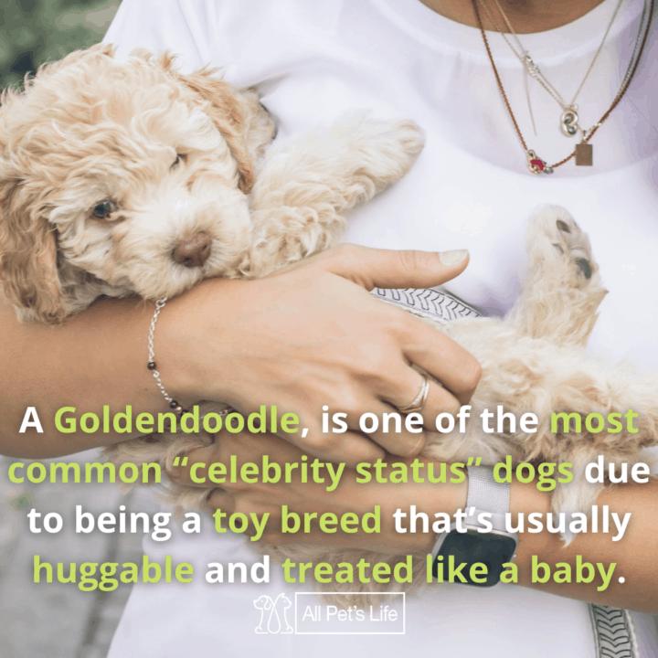 best dog food for Goldendoodles, puppy