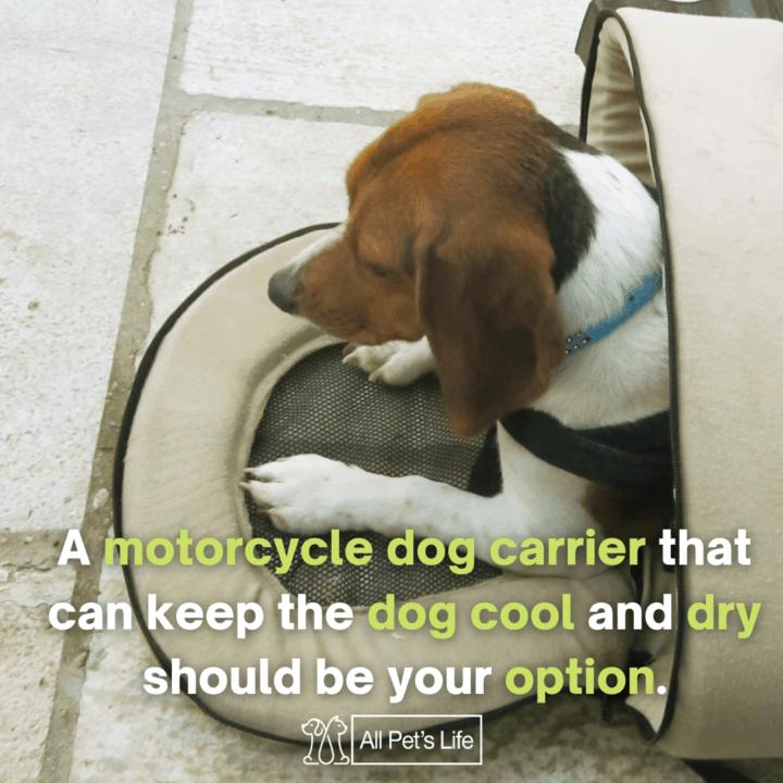 dog inside a carrier