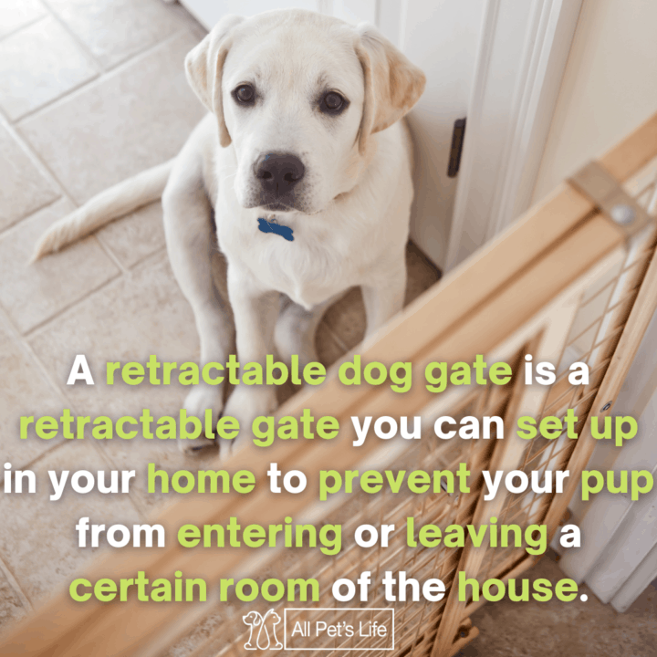 dog sitting inside the Retractable Dog Gate