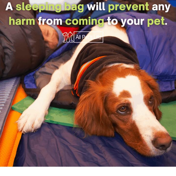 Dog keeping itself warm in a dog sleeping bag