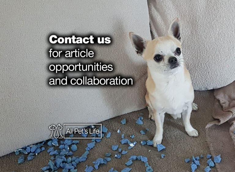 allpetslife contact