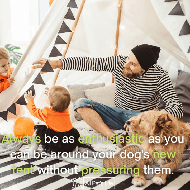 family playing with the dog in the tent