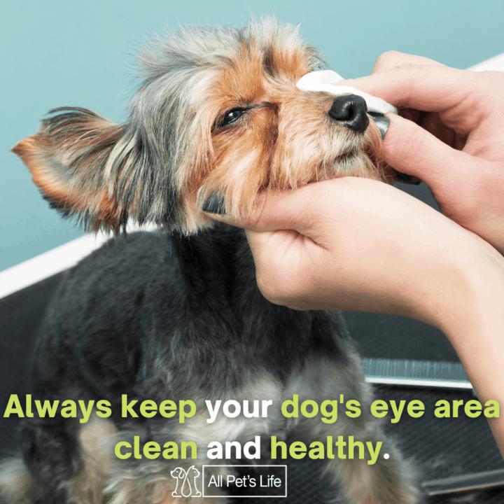 human wiping dog's eyes using dog wipes