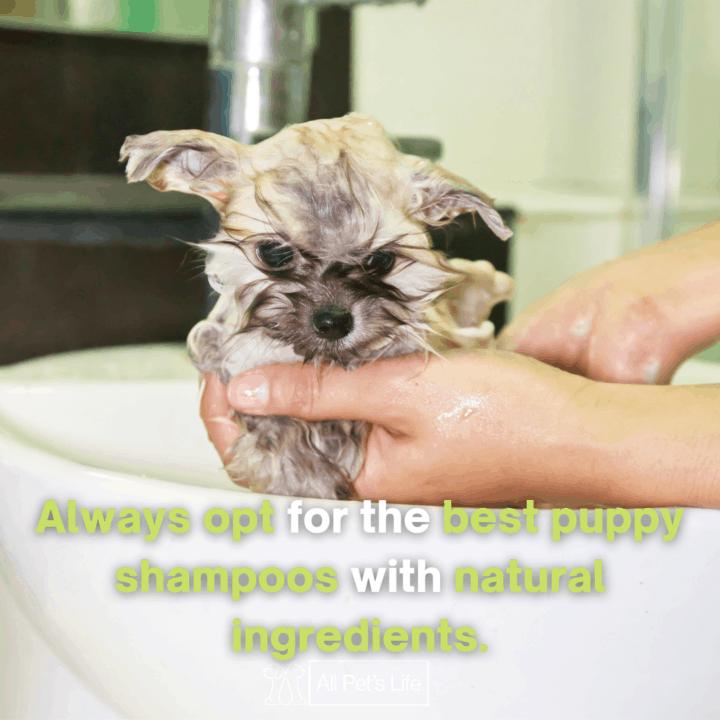 puppy being shampooed