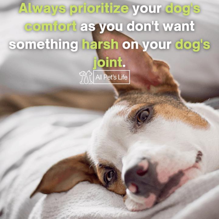 Dog Bunk Beds dog resting
