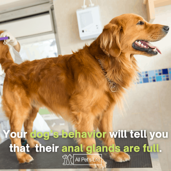 dog having its check up