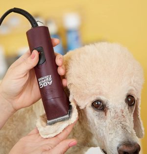 best dog clippers for poodles andis ultraedge super 2 speed