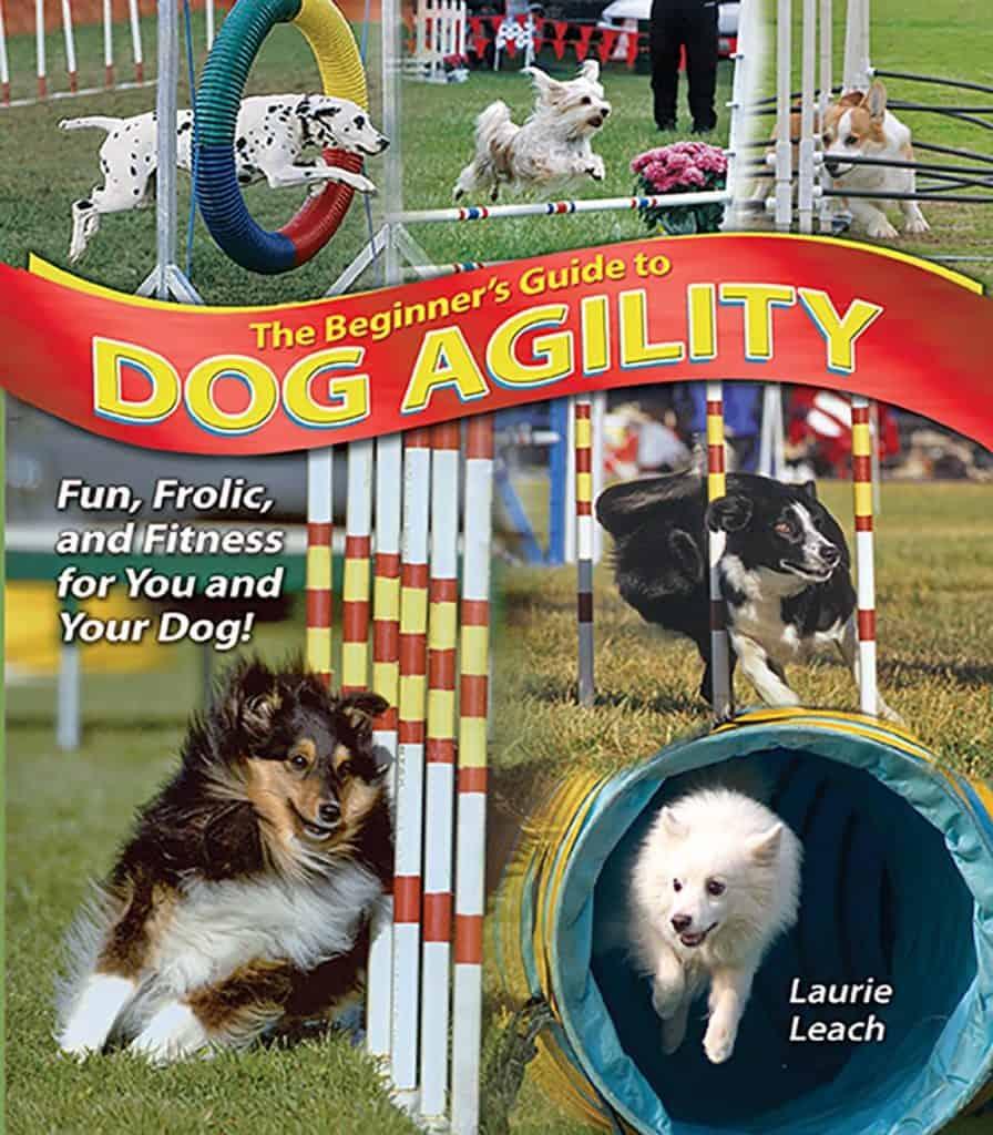 beginners guide dog agility