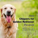 5 Best Clippers for Golden Retriever Reviews [2021]