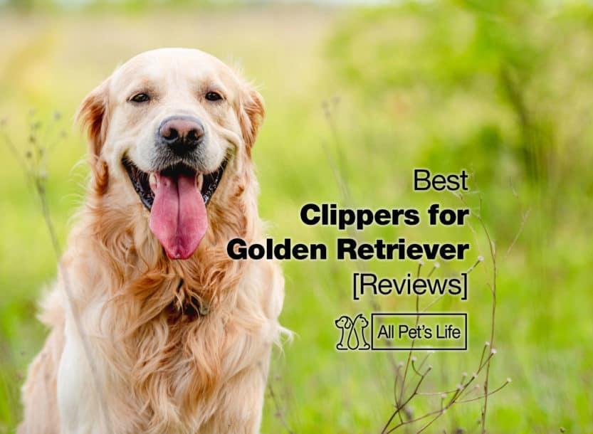 best clippers for golden retriever