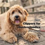 10 Best Clippers for Goldendoodles Reviews [2021]