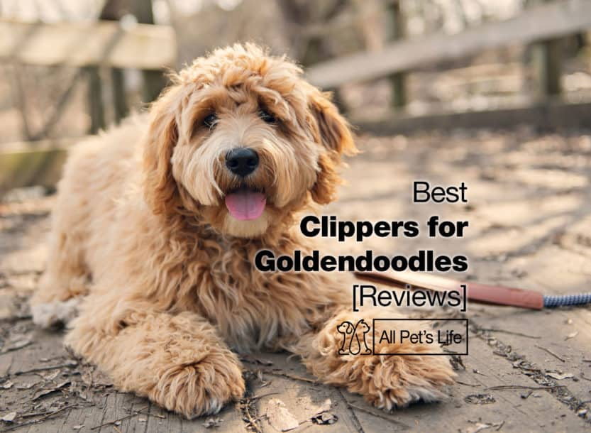 best clippers for Goldendoodles