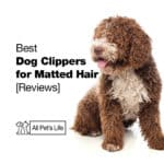 5 Best Dog Clippers for Matted Hair 2021 [Reviews]