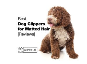 Read more about the article 5 Best Dog Clippers for Matted Hair 2021 [Reviews]