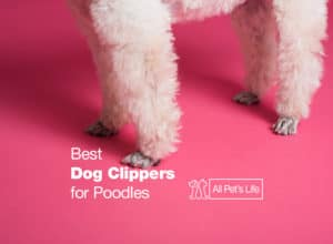 Read more about the article 7 Best Dog Clippers for Poodles [2021 REVIEWS]
