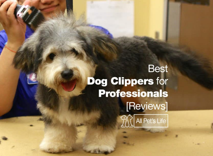 best dog clippers professionals
