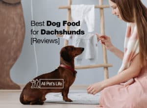Read more about the article 5 Best Dog Food for Dachshunds Reviews [2021]