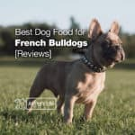 5: Best Dog Food for French Bulldogs [Top 2021 Reviews]
