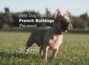 Read more about the article 5: Best Dog Food for French Bulldogs [Top 2021 Reviews]