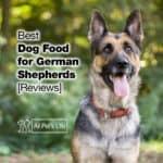 4 Best Dog Food for German Shepherd 2021 [Reviews]