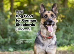 Read more about the article 4 Best Dog Food for German Shepherd 2021 [Reviews]