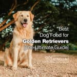 12: Best Dog Food for Golden Retrievers 2021 [The Ultimate Guide]