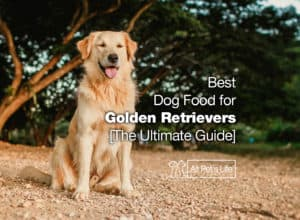 Read more about the article 12: Best Dog Food for Golden Retrievers 2021 [The Ultimate Guide]