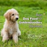 Top 10 Best Dog Food for Goldendoodles 2021 [Reviews]