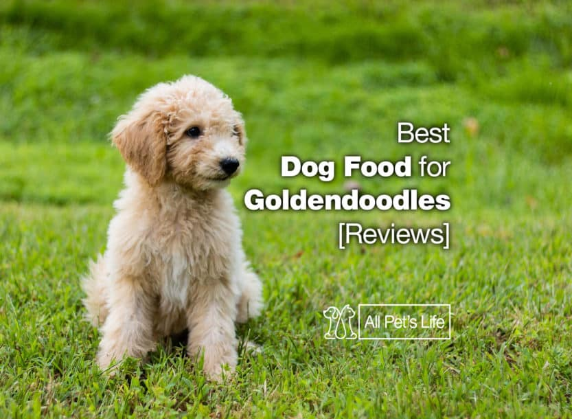 best dog food for goldendoodles