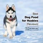 Top 10 Best Dog Food for Huskies in 2021 [Reviews]