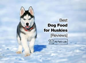 Read more about the article Top 5 Best Dog Food for Huskies in 2021 [Reviews]