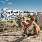 8 Best Dog Food for Pitbulls to Gain Muscle 2021 [Reviews]