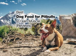 Read more about the article 8 Best Dog Food for Pitbulls to Gain Muscle 2021 [Reviews]