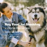 10 Best Dog Food for Shedding + Home Remedies [2021]