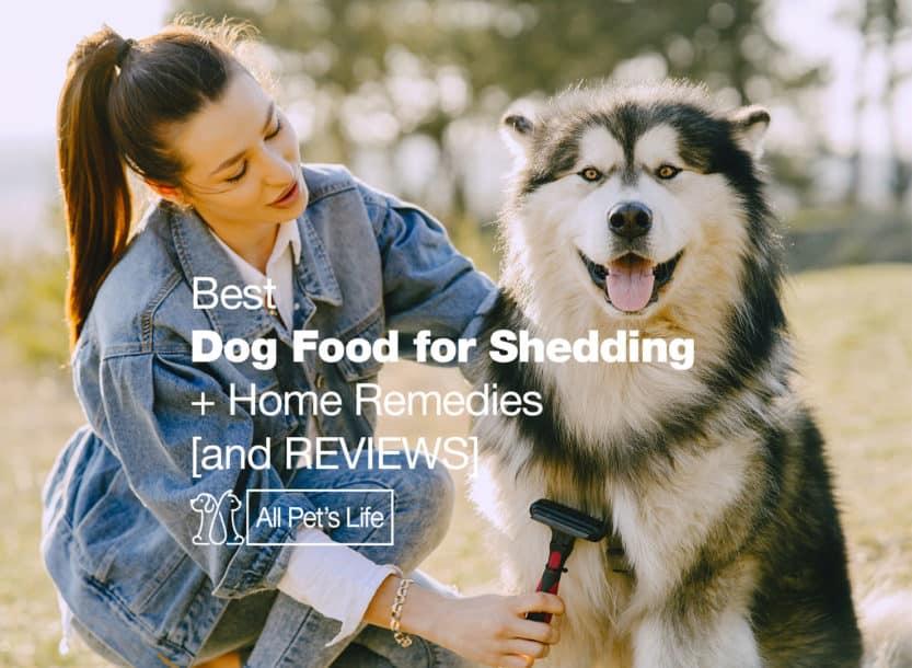 best dog food for shedding less