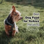 Top 10 Best Dog Food for Yorkies in 2021 [Reviews]