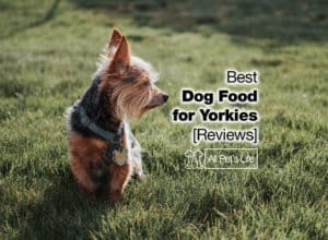 Read more about the article Top 5 Best Dog Food for Yorkies in 2021 [Reviews]