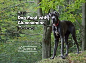 Read more about the article 5 Best Dog Food with Glucosamine for Joint Health 2021 [Reviews]