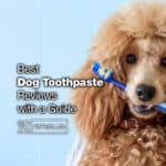 12 Best Dog Toothpaste Reviews with a Guide [2021]